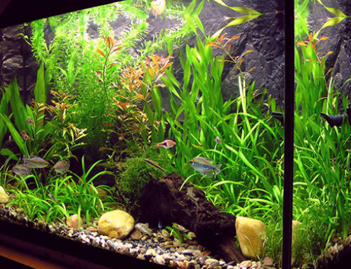 Why it is important to clean your fish tank regularly